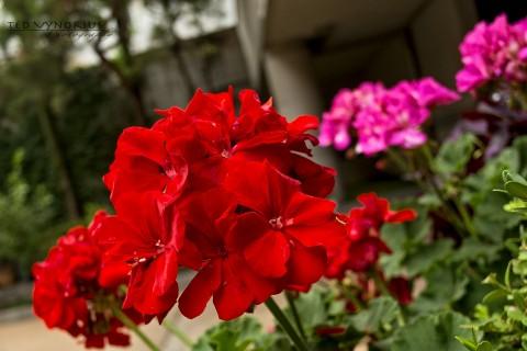 Flowers around the house…