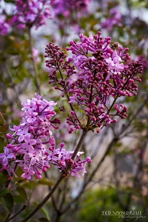 Spring Flowers….
