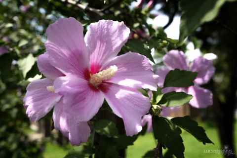 July Flowers….