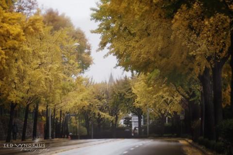 Rainy Day in November